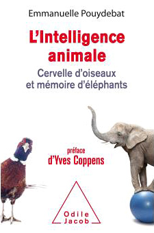 Intelligence animale