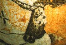 Auroch - Salle des taureaux - Lascaux