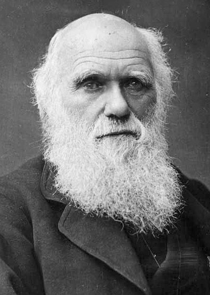 darwin - Photo