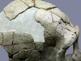 Vue génarale du crâne de Saint Cesaire