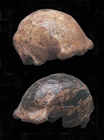 cranes-ngandong-11-9 Homo erectus