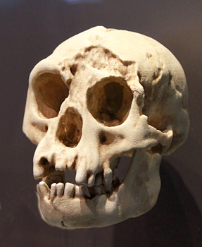 crane-homo-floresiensis