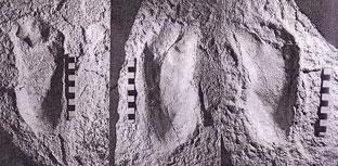 Photo des empreintes de pas de Laétoli