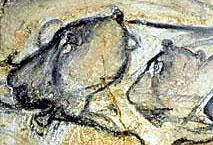 Lionnes - Grotte Chauvet