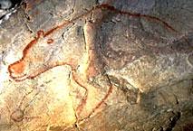 Ours des cavernes - Grotte Chauvet