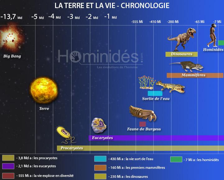 Chronologie et origine de la vie sur terre - Hominidés