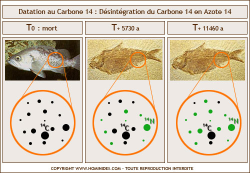 Datation radiométrique vs carbone 14