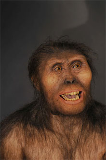 Lucy - australopitheque