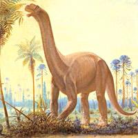 http://www.hominides.com/data/images/illus/dinosaure/camarasaurus.jpg