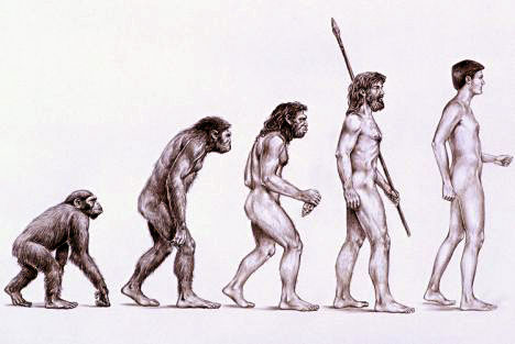 http://www.hominides.com/data/images/illus/evolution/evolution-de-l-homme1.jpg