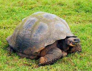 Bmw donnez vous un nom votre voiture - Voiture tortue ...