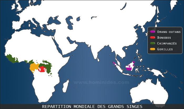 Grands singes primates repartition dans le monde for Habitat du monde