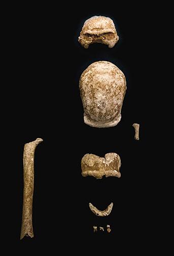 fossiles-neandertal-guattari