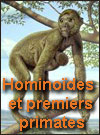 Les Hominoides