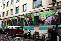 Exposition - Grands Singes - Ile de France - Jane Goodall