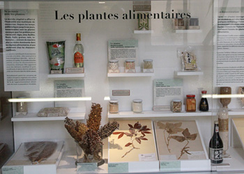 Plantes alimentaires