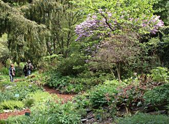 Jardin des plantes paris hominid s for Vers dans les plantes