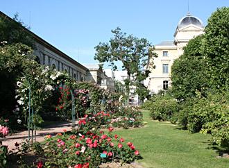 Jardin des Plantes - Paris - Hominidés