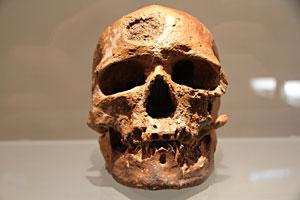Si vous aimez Michel Drucker Homo-sapiens-face