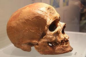 Si vous aimez Michel Drucker Homo-sapiens-profil