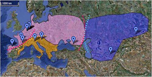 3 sous-groupes de néandertaliens