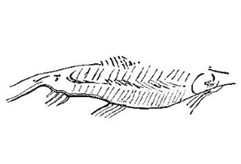 poissons datant habitudes