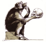 Les Fossiles Manquants Hominides