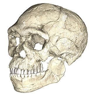 Reconstitution de l'Homo sapiens de Jebel Irhoud au Maros il y a 300 000 ans