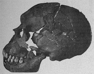 Le crâne Moustier 1