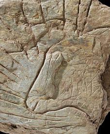 aurochs-tete-gravee-soleil