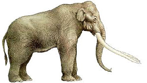 Elephas antiquus