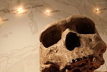 L'évolution des hommes préhistoriques liée à la disparition des éléphants ?